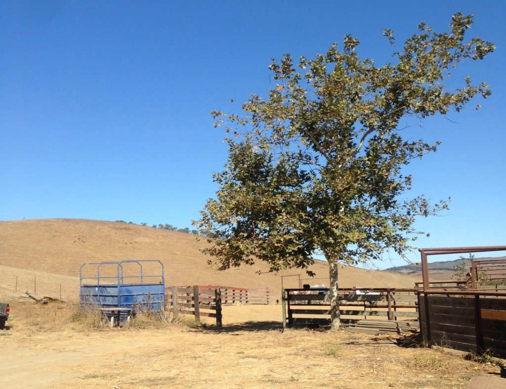 Rancho San Julian