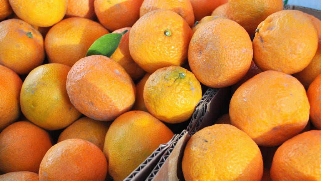 Mandarins at Solvang Farmer's Market in December
