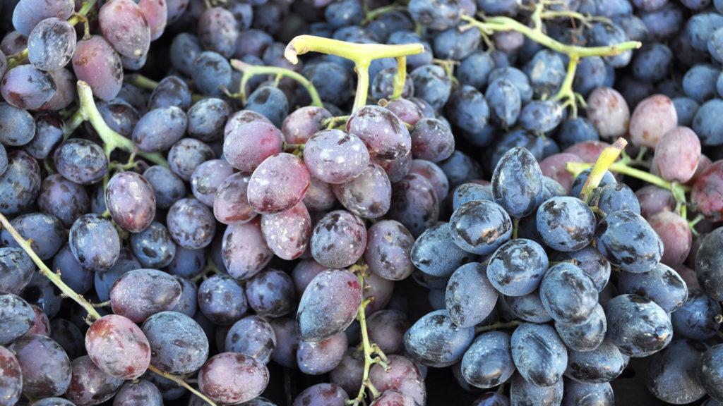 Grapes at Solvang Farmer's Market in December