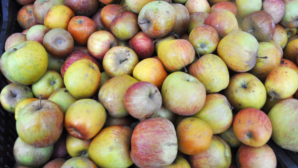 Apples at Solvang Farmer's Market in December