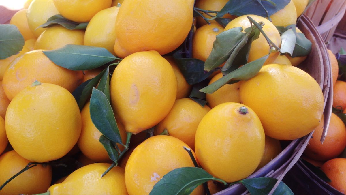 Lemons at Hollywood Farmers Market
