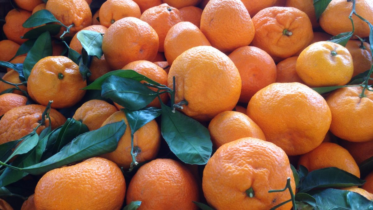 Mandarins at Hollywood Farmers Maret